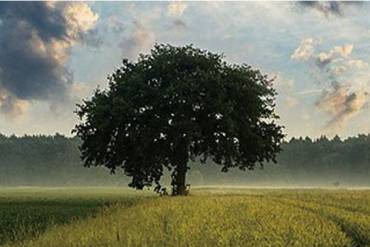 How Trees Can Benefit your Well-being