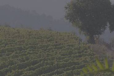 Wine: Another Reason to be Thankful for Trees