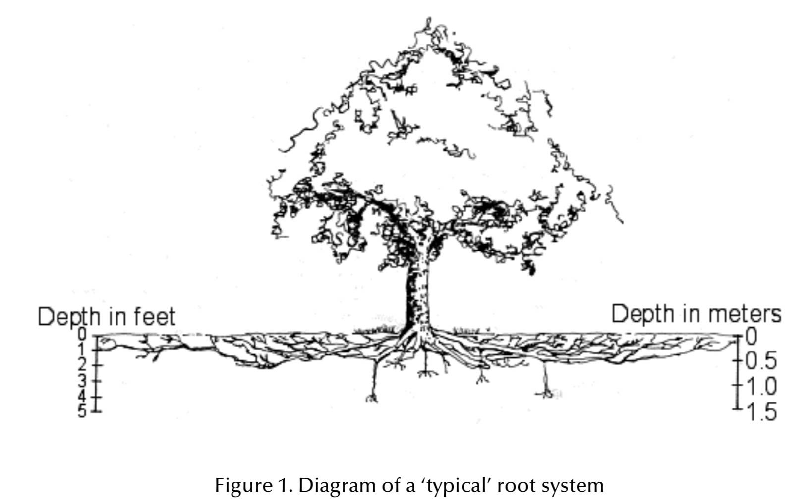Tree Root Distribution Hellis Solutions Limited